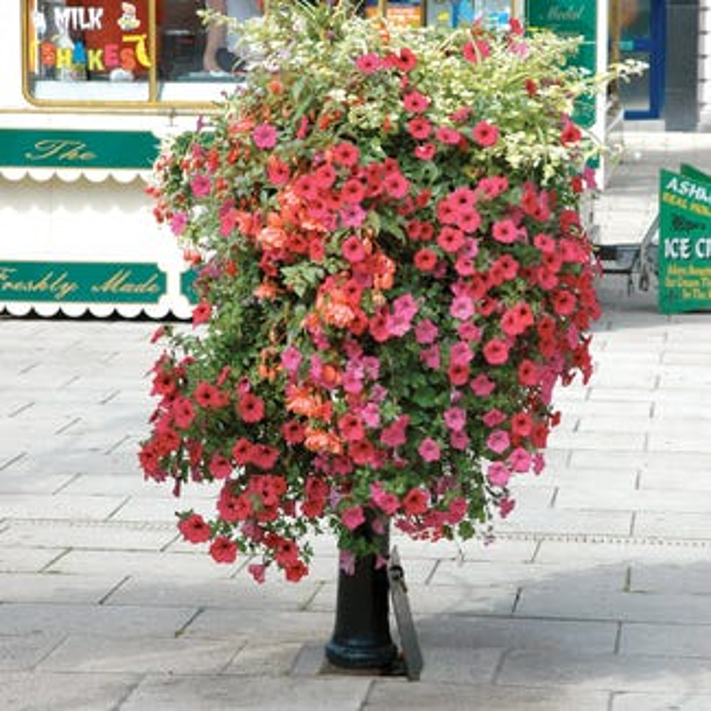 Manchester Flower Basket